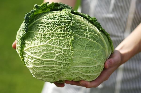 7 thực phẩm cực giàu omega 3 mẹ bầu nên ăn - 6