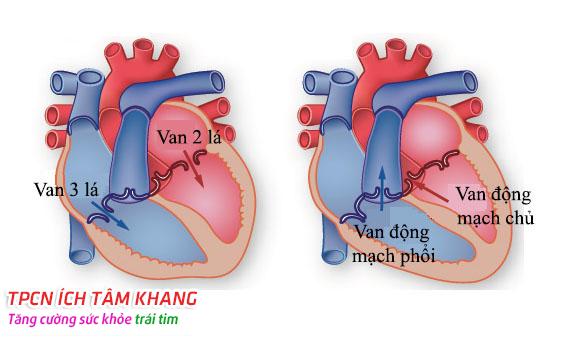 Câu hỏi 64: Làm thế nào phát hiện mình bị bệnh van tim ?